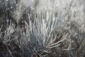 2.Śnieżne detale - Przyroda