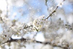 8.Wiosna - Przyroda